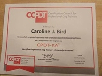 CCPDT Certificate