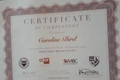 Dog Dog Reactivity Certificate
