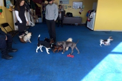 Small dog social play group